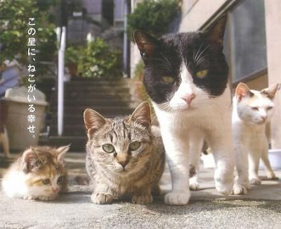 猫写真チラシ