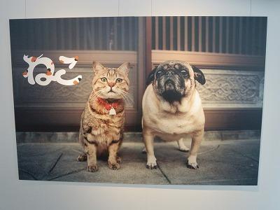 猫写真展4