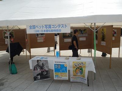 平成25年度 中央行事 動物愛護ふれあいフェスティバル30
