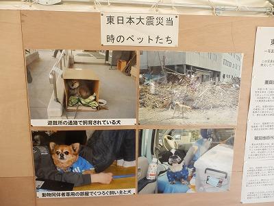 平成25年度 中央行事 動物愛護ふれあいフェスティバル51