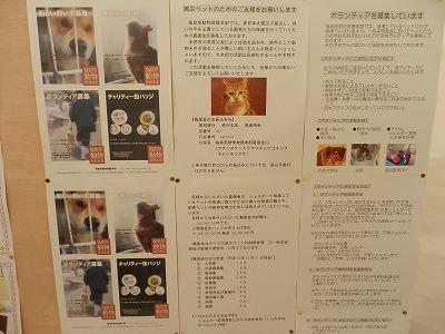 平成25年度 中央行事 動物愛護ふれあいフェスティバル56