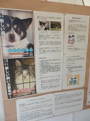 平成25年度 中央行事 動物愛護ふれあいフェスティバル58