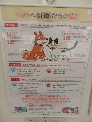 平成27年度 動物愛護週間中央行事 動物愛護ふれあいフェスティバル28-10