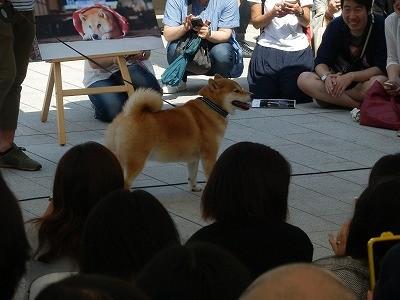 平成27年度 動物愛護週間中央行事 動物愛護ふれあいフェスティバル52