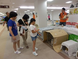 ペットとの防災を考える シピィ  2015.8.30 活動写真21