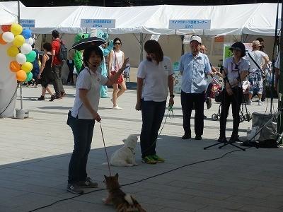 平成27年度 動物愛護週間中央行事 動物愛護ふれあいフェスティバル23