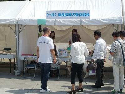 平成27年度 動物愛護週間中央行事 動物愛護ふれあいフェスティバル36