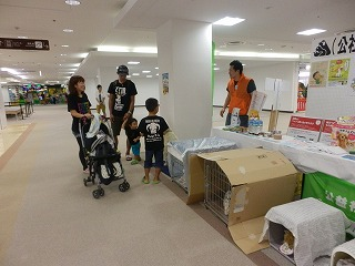 ペットとの防災を考える シピィ  2015.8.30 活動写真25