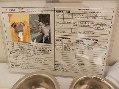 平成27年度 動物愛護週間中央行事 動物愛護ふれあいフェスティバル28-8