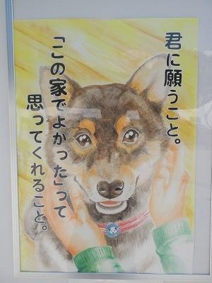 平成27年度 動物愛護週間中央行事 動物愛護ふれあいフェスティバル64