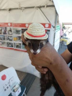 平成27年度 動物愛護週間中央行事 動物愛護ふれあいフェスティバル55