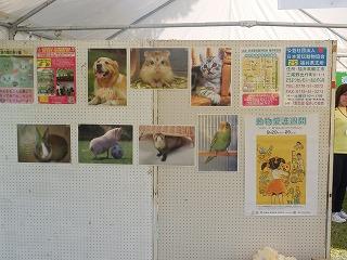 平成27年度 福井県動物愛護ふれあいフェスティバル9