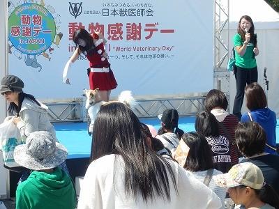 2015(公社)日本獣医師会 動物感謝デー5