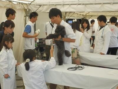 2015(公社)日本獣医師会 動物感謝デー32