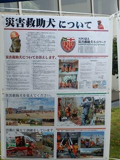 平成27年度 福井県動物愛護ふれあいフェスティバル106