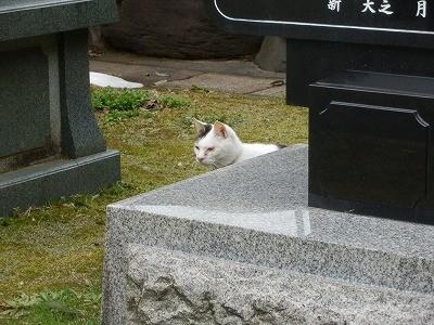 御誕生寺さん 猫の日 2016.2.22 供養祭1