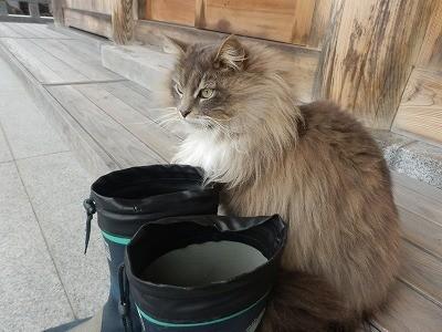 御誕生寺さん 猫の日 2016.2.22 供養祭3