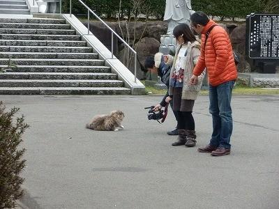 御誕生寺さん 猫の日 2016.2.22 供養祭14