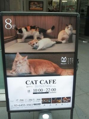 猫カフェモカ澁谷3