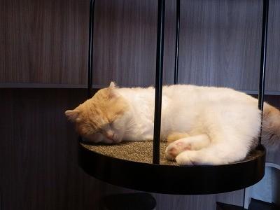 猫カフェモカ澁谷23