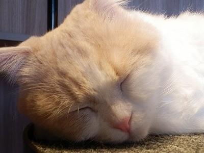 猫カフェモカ澁谷24