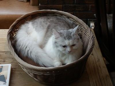 猫カフェモカ澁谷13