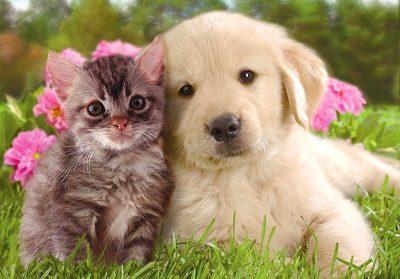 犬猫 画像2