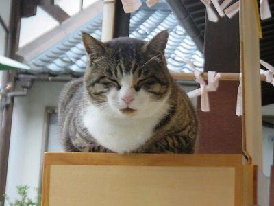 御誕生寺さん 猫ちゃん
