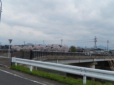 2017.4.10 おおぞら近くの桜13