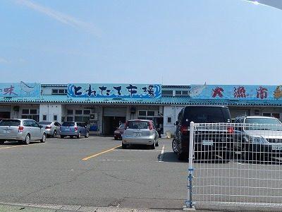 小浜市川崎地区 地域猫調査7