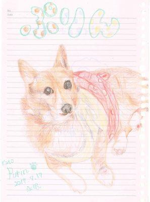 鯖江市 K様 コーギー ぷりんちゃん 成犬