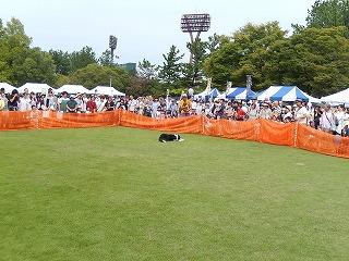 2017.9.23 石川県動物愛護フェスティバル37