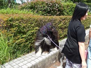 2017.9.23 石川県動物愛護フェスティバル48