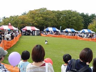 2017.9.23 石川県動物愛護フェスティバル42