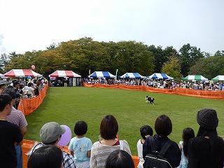 2017.9.23 石川県動物愛護フェスティバル41
