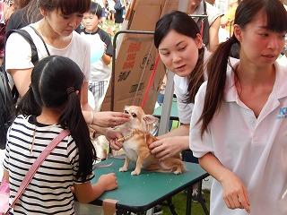 2017.9.23 石川県動物愛護フェスティバル33