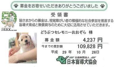 公益財団法人 日本盲導犬協会 募金 2017