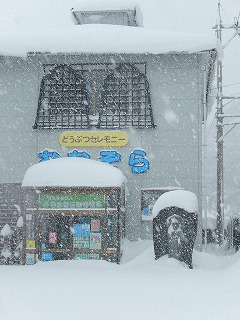 2018.2.6 大雪5