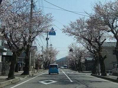 2018.3.31 運動公園近くの桜3