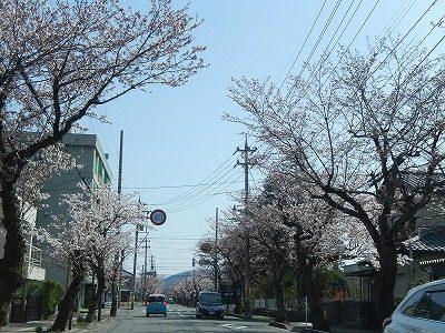 2018.3.31 運動公園近くの桜2