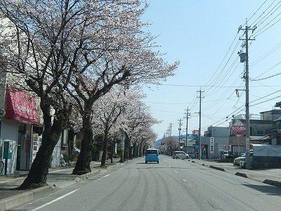 2018.3.31 運動公園近くの桜