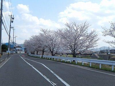 2018.4.3 おおぞら近くの桜11