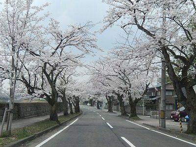 2018.4.2 旧三秀プール前の桜5