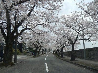2018.4.2 旧三秀プール前の桜8