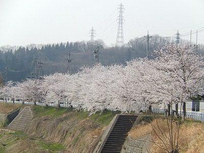 2018.4.3 おおぞら近くの桜25