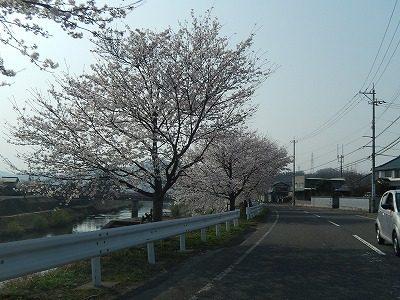 2018.4.3 おおぞら近くの桜16