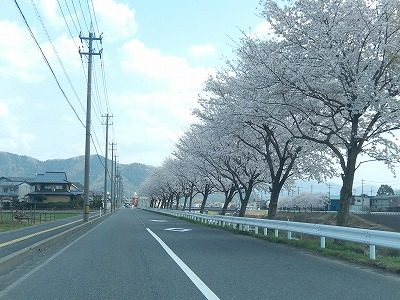 2018.4.3 おおぞら近くの桜13