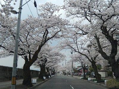 2018.4.2 旧三秀プール前の桜