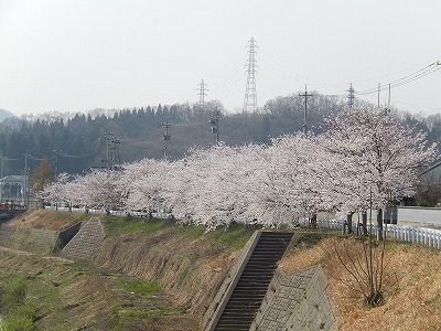2018.4.3 おおぞら近くの桜20