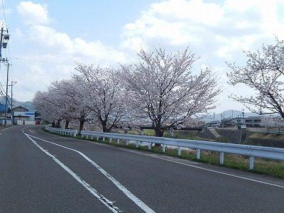 2018.4.3 おおぞら近くの桜10